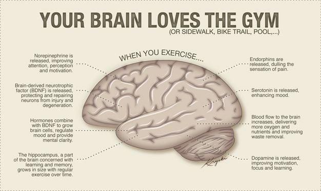 Your Brain Loves Exercise