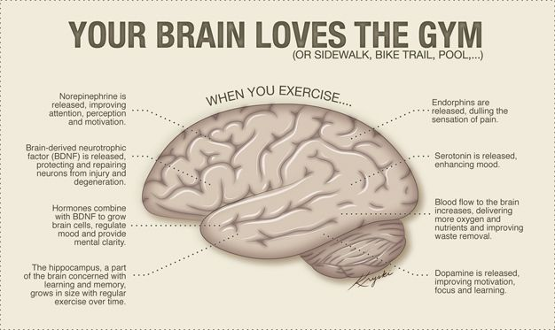 Your Brain Loves Exercise