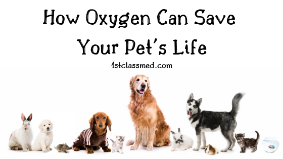 How Oxygen Can Save Your Pet's Life