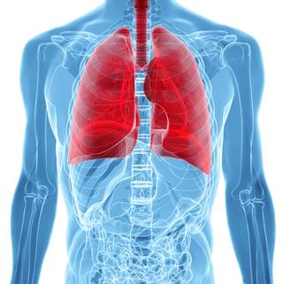 Lungs2.jpg