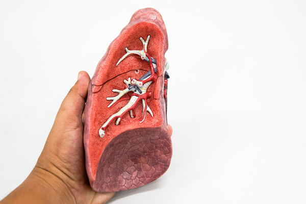 example of a healthy lung