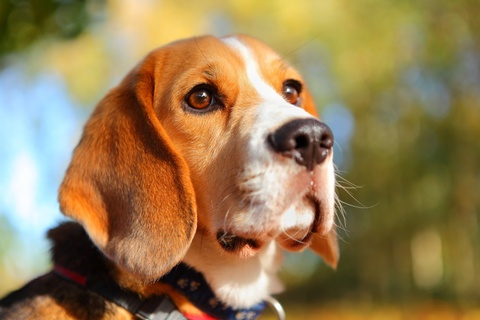 Pets and COPD: What You Need to Know