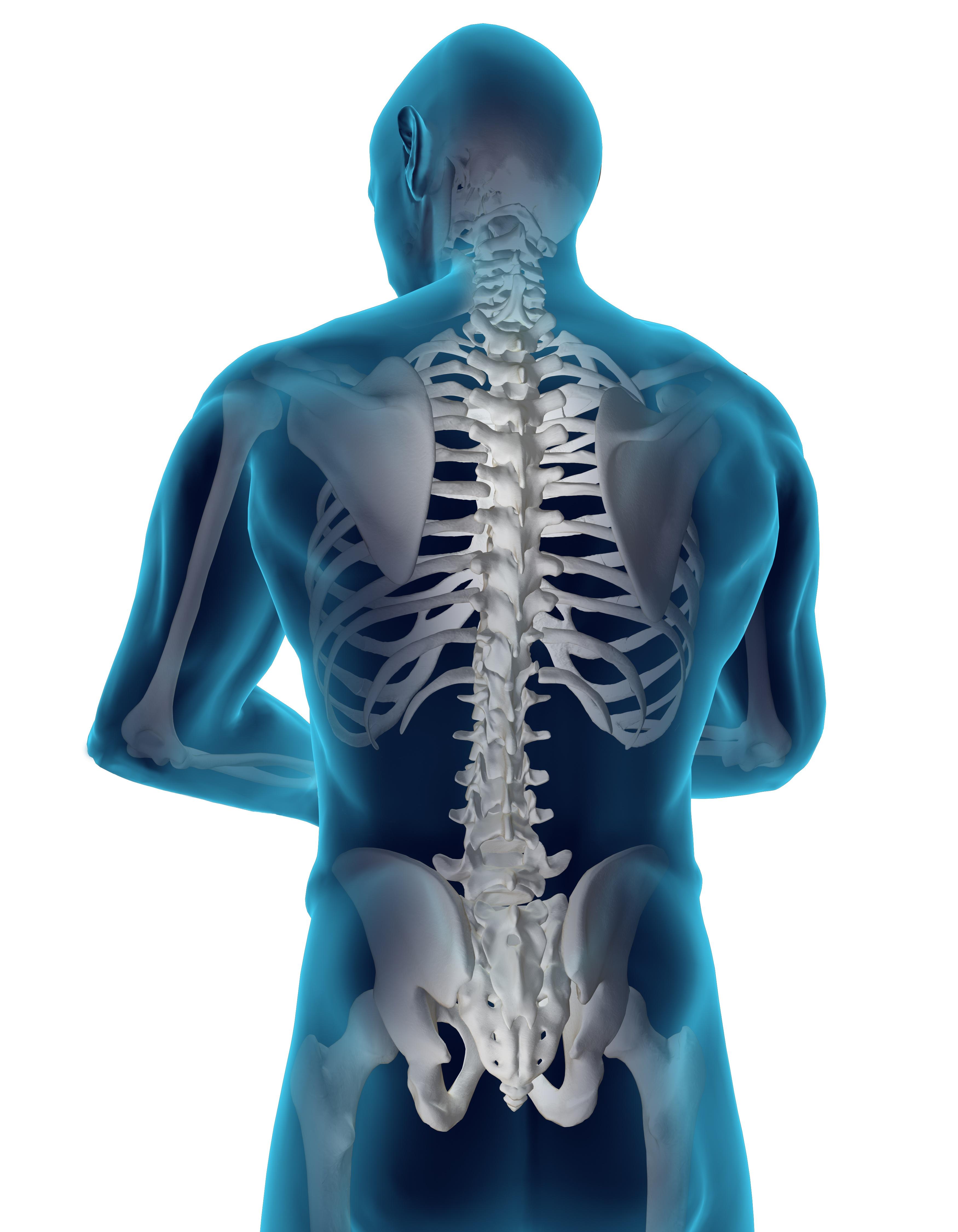 human back.jpg